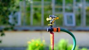 Πότισμα της πράσινης χλόης Θερινή κηπουρική απόθεμα βίντεο