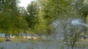 Πότισμα του δέντρου στο πάρκο απόθεμα βίντεο