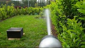 Πότισμα του πολύβλαστου πράσινου εγχώριου κήπου από έναν ψεκαστήρα απόθεμα βίντεο