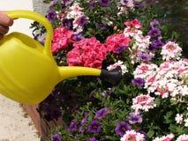 Πότισμα των λουλουδιών Στοκ Εικόνες