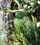 πότισμα φυτών στοκ εικόνα