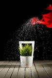 πότισμα φυτών Στοκ εικόνα με δικαίωμα ελεύθερης χρήσης