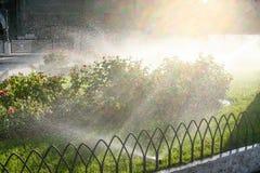 Πότισμα χορτοταπήτων Πότισμα των κρεβατιών λουλουδιών Στοκ εικόνες με δικαίωμα ελεύθερης χρήσης