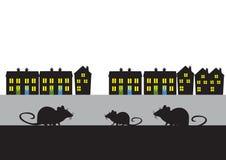 Πόλης αρουραίοι Στοκ Εικόνα