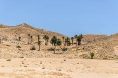 Πόλη οάσεων της Τυνησίας Στοκ Φωτογραφίες