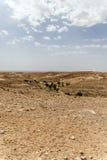 Πόλη οάσεων της Τυνησίας Στοκ εικόνες με δικαίωμα ελεύθερης χρήσης