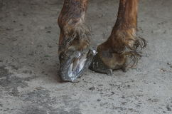 Πόδια αλόγων Στοκ Εικόνες