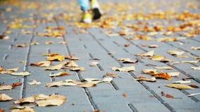 Πόδια γυναικών ` s που περπατούν μακριά η κινηματογράφηση σε πρώτο πλάνο ανασκόπησης φθινοπώρου χρωματίζει το φύλλο κισσών πορτοκ απόθεμα βίντεο