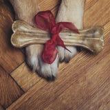 Πόδια και κόκκαλο δώρων Στοκ Εικόνα