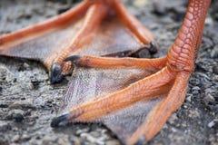 Πόδια παπιών Στοκ φωτογραφία με δικαίωμα ελεύθερης χρήσης