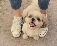 Πόδια ποδιών σκυλιού δίπλα στον ιδιοκτήτη -- να περπατήσει από κοινού στοκ φωτογραφίες με δικαίωμα ελεύθερης χρήσης