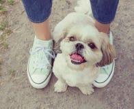 Πόδια ποδιών σκυλιού δίπλα στον ιδιοκτήτη -- να περπατήσει μαζί (instagram στοκ εικόνα με δικαίωμα ελεύθερης χρήσης