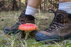 Πόδια στις μπότες πεζοπορίας και το μανιτάρι αγαρικών μυγών Στοκ Εικόνες
