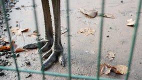 Πόδια στρουθοκαμήλων Στοκ Φωτογραφίες