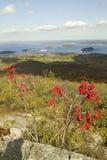 Πόδι άποψης φθινοπώρου από το 1530 - το υψηλό βουνό Cadillac με τις απόψεις των Porcupine νησιών, ο κόλπος και η Ολλανδία Αμερική στοκ εικόνες