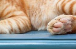 Πόδι γατών στα υπόβαθρα πατωμάτων τούβλου Στοκ Φωτογραφίες