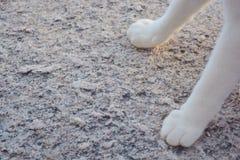 πόδι γατών στο δάπεδο πετρών Στοκ Φωτογραφίες
