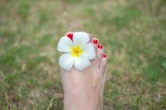Πόδι με τα κόκκινα καρφιά Στοκ Εικόνες