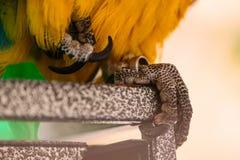 Πόδι παπαγάλων Ara Στοκ φωτογραφία με δικαίωμα ελεύθερης χρήσης