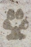 Πόδι σκυλιών στοκ φωτογραφία