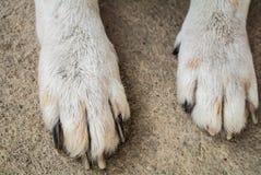 Πόδι σκυλιών Στοκ Εικόνα