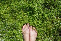 Πόδι στο λιβάδι Στοκ Φωτογραφίες