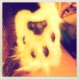 πόδι s γατών Στοκ Εικόνες