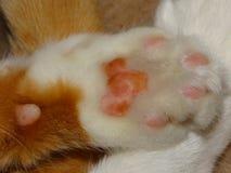 πόδι s γατών Στοκ φωτογραφία με δικαίωμα ελεύθερης χρήσης