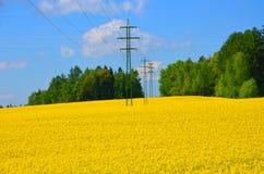 Πόλος ηλεκτρικής ενέργειας στο fielda βιασμών Στοκ εικόνες με δικαίωμα ελεύθερης χρήσης
