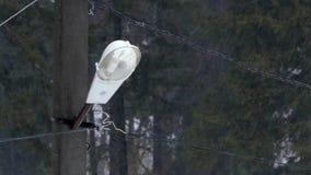 Πόλος και λαμπτήρας ηλεκτρικής ενέργειας στο δάσος στο βροχερό καιρό απόθεμα βίντεο
