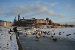 Πύργος και κύκνοι της Κρακοβίας Wawel Στοκ φωτογραφίες με δικαίωμα ελεύθερης χρήσης