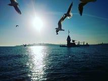 Πύργος και πουλιά κοριτσιών στοκ φωτογραφίες