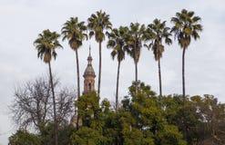 Πύργος μεταξύ των φοινίκων ύψους Plaza de Espana, Σεβίλη Στοκ Φωτογραφίες