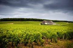 Πύργος με τους αμπελώνες, Burgundy Γαλλία στοκ φωτογραφία με δικαίωμα ελεύθερης χρήσης