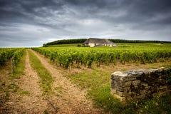 Πύργος με τους αμπελώνες, Burgundy Γαλλία στοκ φωτογραφίες