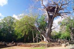 Πύργος παρατήρησης της Κένυας Αφρική καταστροφών Gedi στοκ εικόνες με δικαίωμα ελεύθερης χρήσης