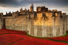Πύργος της επίδειξης παπαρουνών του Λονδίνου WW1 Στοκ Εικόνες