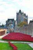 Πύργος του Λονδίνου με τη θάλασσα των κόκκινων παπαρουνών για να θυμηθεί τους πεσμένους στρατιώτες WWI - 30 Αυγούστου 2014 - Λονδ Στοκ εικόνα με δικαίωμα ελεύθερης χρήσης