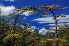 Πύλη δέντρων στο βουνό χιονιού δράκων νεφριτών στοκ φωτογραφία με δικαίωμα ελεύθερης χρήσης