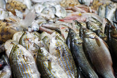 πώληση αγοράς ψαριών Στοκ Εικόνες