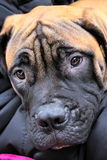 πώληση σκυλιών Στοκ φωτογραφία με δικαίωμα ελεύθερης χρήσης