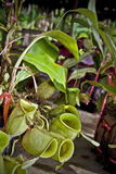 πώληση φυτών σταμνών στοκ φωτογραφία με δικαίωμα ελεύθερης χρήσης
