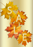 πώληση φύλλων φθινοπώρου Στοκ εικόνα με δικαίωμα ελεύθερης χρήσης