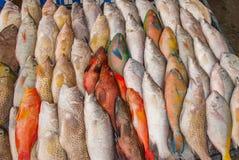 Πώληση ψαριών Θαλασσινά στον πάγο στην αγορά ψαριών Στοκ εικόνα με δικαίωμα ελεύθερης χρήσης