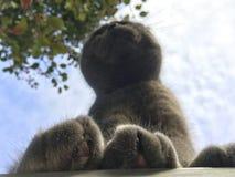 Πώς να δει τις μεγάλες γούνινες γάτες ποδιών, έντομο Στοκ Φωτογραφία