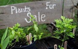 πώληση φυτών Στοκ Φωτογραφίες