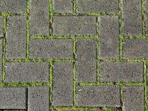 Πλάκες επίστρωσης & πράσινη χλόη Στοκ Φωτογραφία