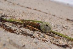 Πλάσματα θάλασσας Στοκ εικόνες με δικαίωμα ελεύθερης χρήσης