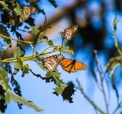 Πλάσματα φύσης πεταλούδες στοκ φωτογραφίες με δικαίωμα ελεύθερης χρήσης