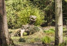 Πλάσμα που κρύβεται στο δάσος Στοκ Εικόνες